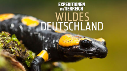 Expeditionen ins Tierreich: Wildes...